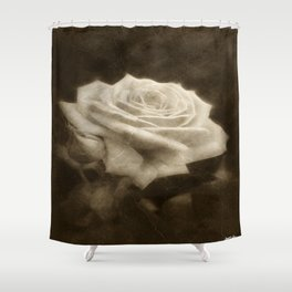 Pink Roses in Anzures 3 Antiqued Shower Curtain