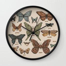 Butterflies and Moth Specimens Wall Clock