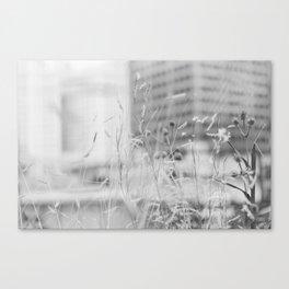 Urban Prairie Canvas Print