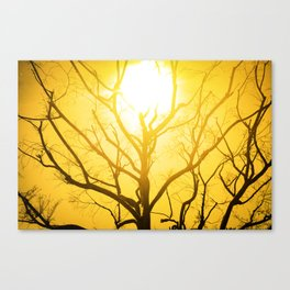 The Sun Tree Canvas Print