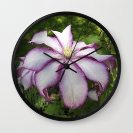 Clematis - Stunning two-tone flowers Wall Clock