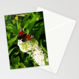 The Peacock Butterfly Stationery Cards