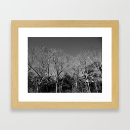 Dead Tree Florest Framed Art Print