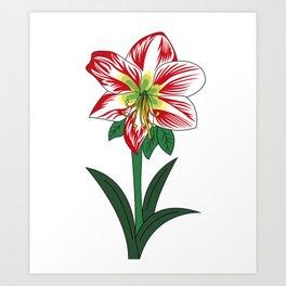 Amarillis Art Print