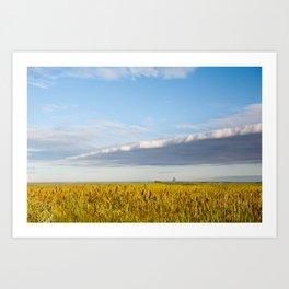 Morass grass in sun rising Art Print