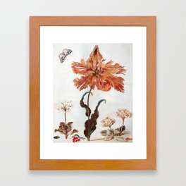 A Parrot Tulip Auriculas & Red Currants with a Magpie Moth Caterpillar Pupa by Maria Sibylla Merian Framed Art Print
