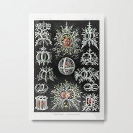 Marine creatures by Ernst Haeckel Metal Print