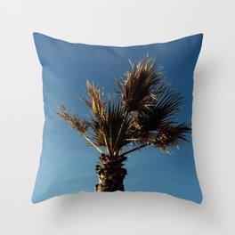 Palmetto in Lacanau-palms,drupe,sabal,swamp,cabbage,abanico,drupa,palmera Throw Pillow