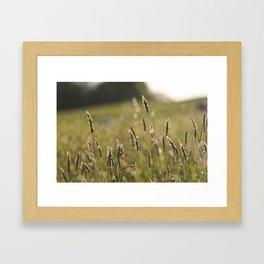 Meadow (Colour) Framed Art Print