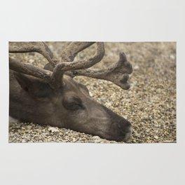 Reindeer Portrait Rug