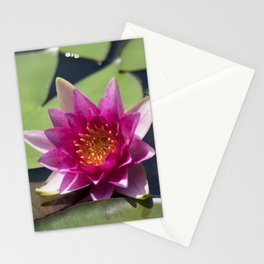 Longwood Gardens - Spring Series 305 Stationery Cards