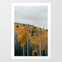 Aspen 1 Art Print