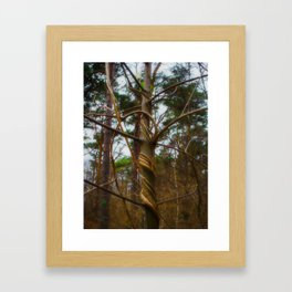 Tree Spiral Framed Art Print