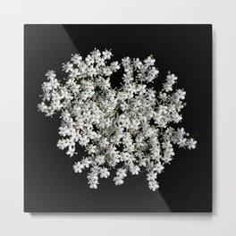 Elderflower Metal Print