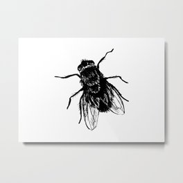 Drawing house-fly Metal Print