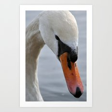 Swan portrait 2 Art Print