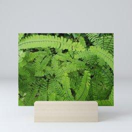 Ferns Mini Art Print