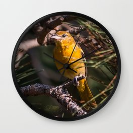 Morning Oriole Wall Clock
