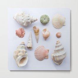 Shell collection Metal Print