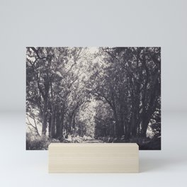 Tunnel of Trees - Kauai, Hawaii Mini Art Print