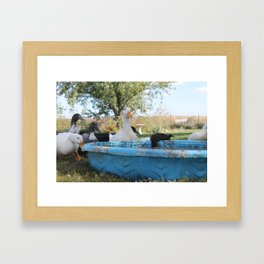 What's This, What's This On My Beak? Framed Art Print