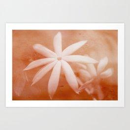 Wild Jasmine Art Print
