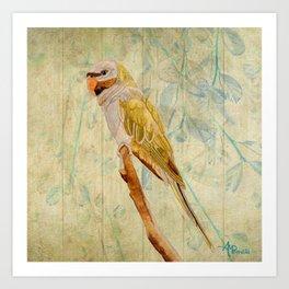 Derbyan Parakeet I Art Print