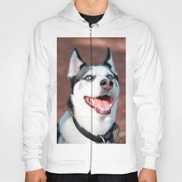 Siberian Husky dog face Hoody