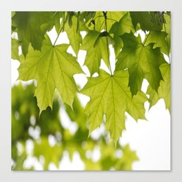 The Green Leaves of Summer Canvas Print
