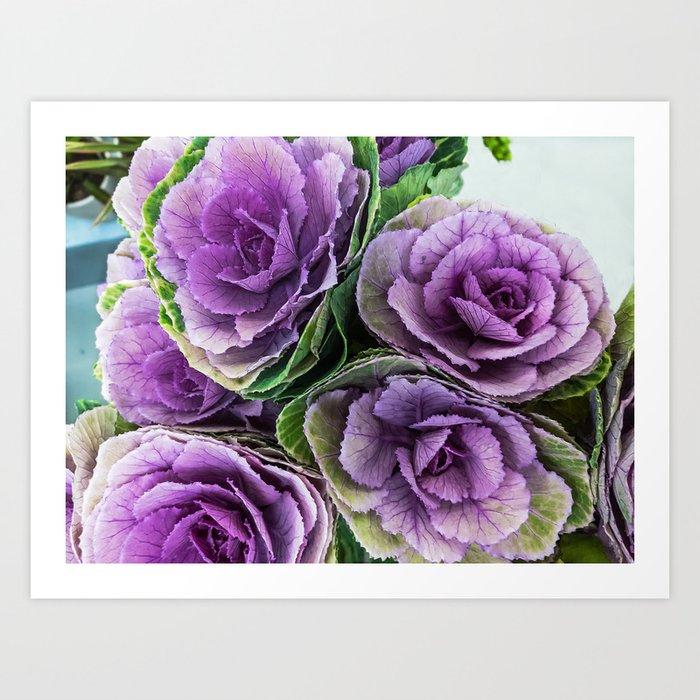 Ornamental Cabbage Flower Sirenity Art Print By Marinausmansky