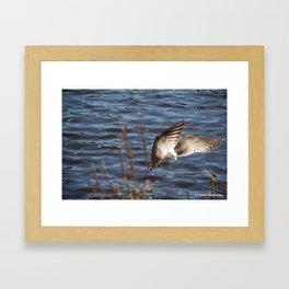 Flying Dove Framed Art Print
