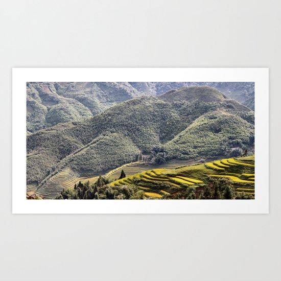 Teraces of Rice Art Print