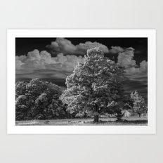 Fall black & white Landscape of Autumn Tree in West Michigan Art Print