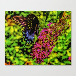 Mongrove Skipper Butterfly Canvas Print