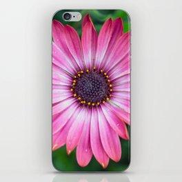 Flower Portrait - Pink Sunshine iPhone Skin