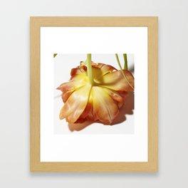 Face down bloom Framed Art Print
