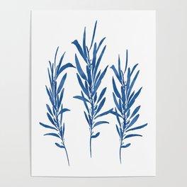Eucalyptus Branches Blue Poster