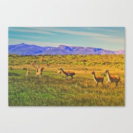 Patagonia Wildlife (Torres del Paine, Chile) Canvas Print
