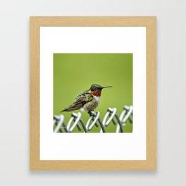 Hummingbird on a Fence Framed Art Print