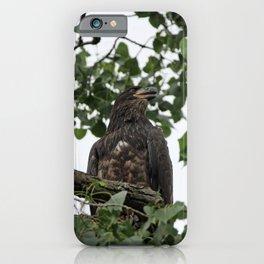 Juvenile Bald Eagle iPhone Case