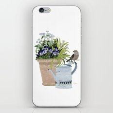 Pansies in a pot iPhone Skin