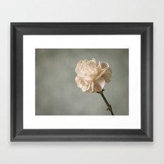 White carnation Framed Art Print