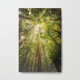 Forest Tree Tops Metal Print