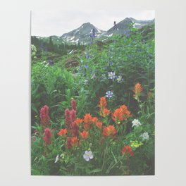 Wildflowers - Yankee Boy Basin above Ouray, Colorado Poster