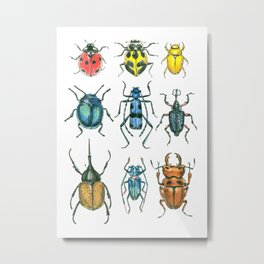 Beetles Metal Print