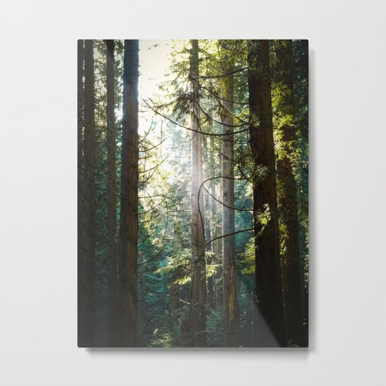 Luminosity Metal Print