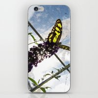 malachite iPhone & iPod Skins featuring Malachite Butterfly by Jacqueline Clark