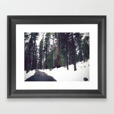 Sequoia Forest Framed Art Print