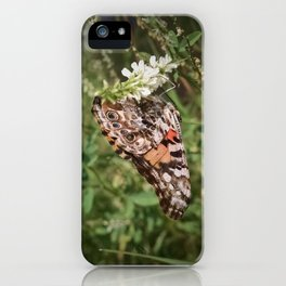 Painted Lady and Sweet Clover iPhone Case