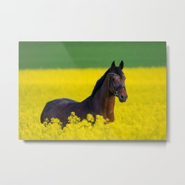 Mare in a field of rapeseed blossoms Metal Print